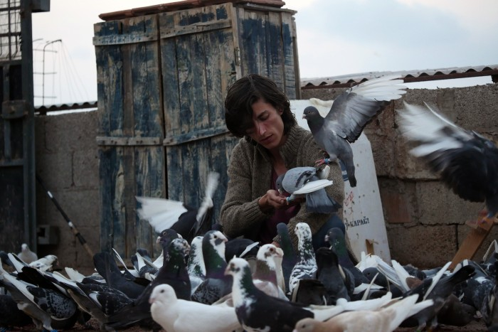 "Filmszene aus ""Güvercin: The Pigeon"""